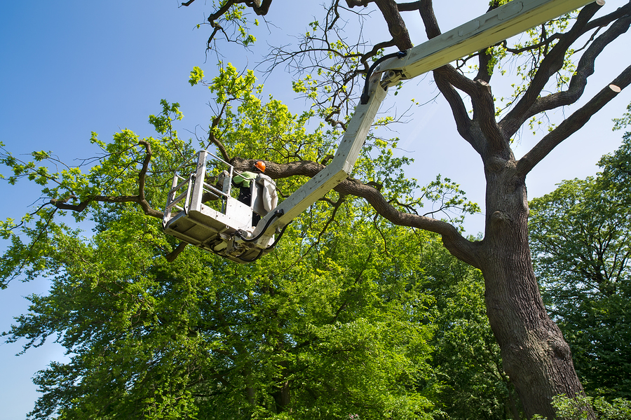 Welcome to MMM Tree Service